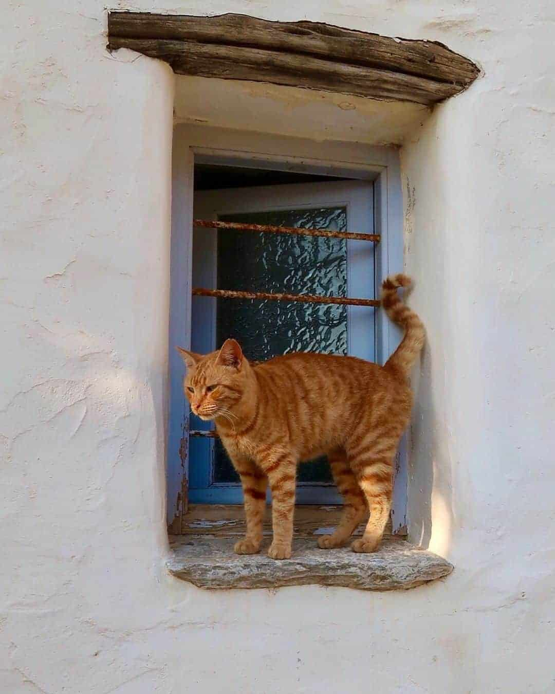 Cats are everywhere in Greece, but they are generally well-cared for